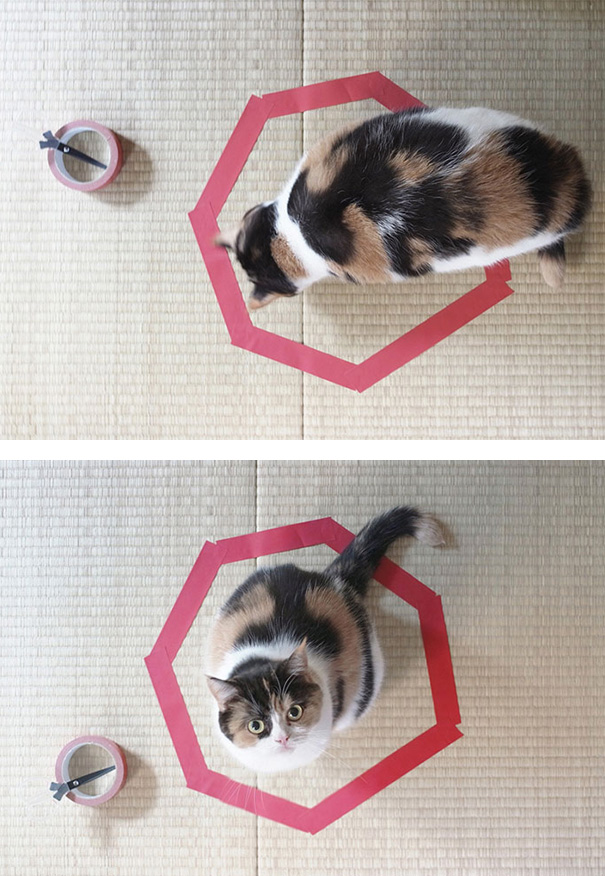 How To Trap A Cat