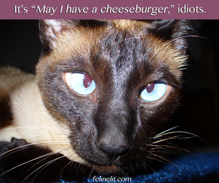 Blog Takes Aim At Cat Memes