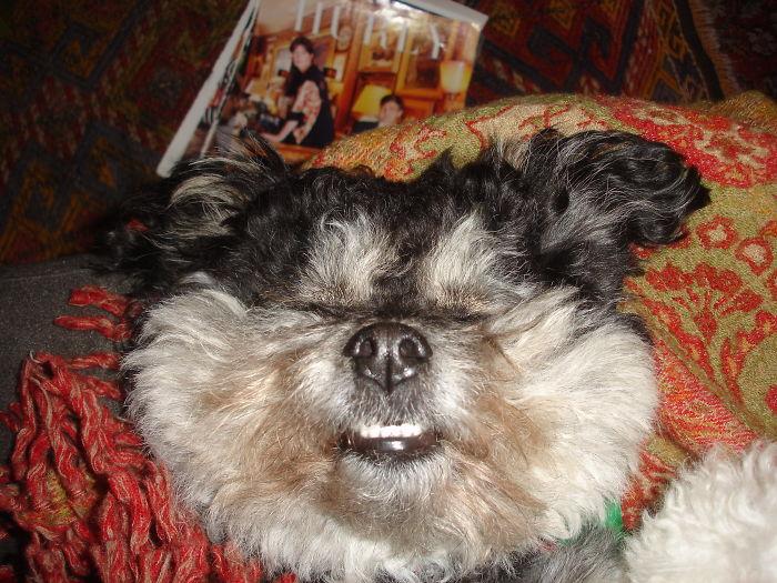 Gertie Getting Belly Rubs