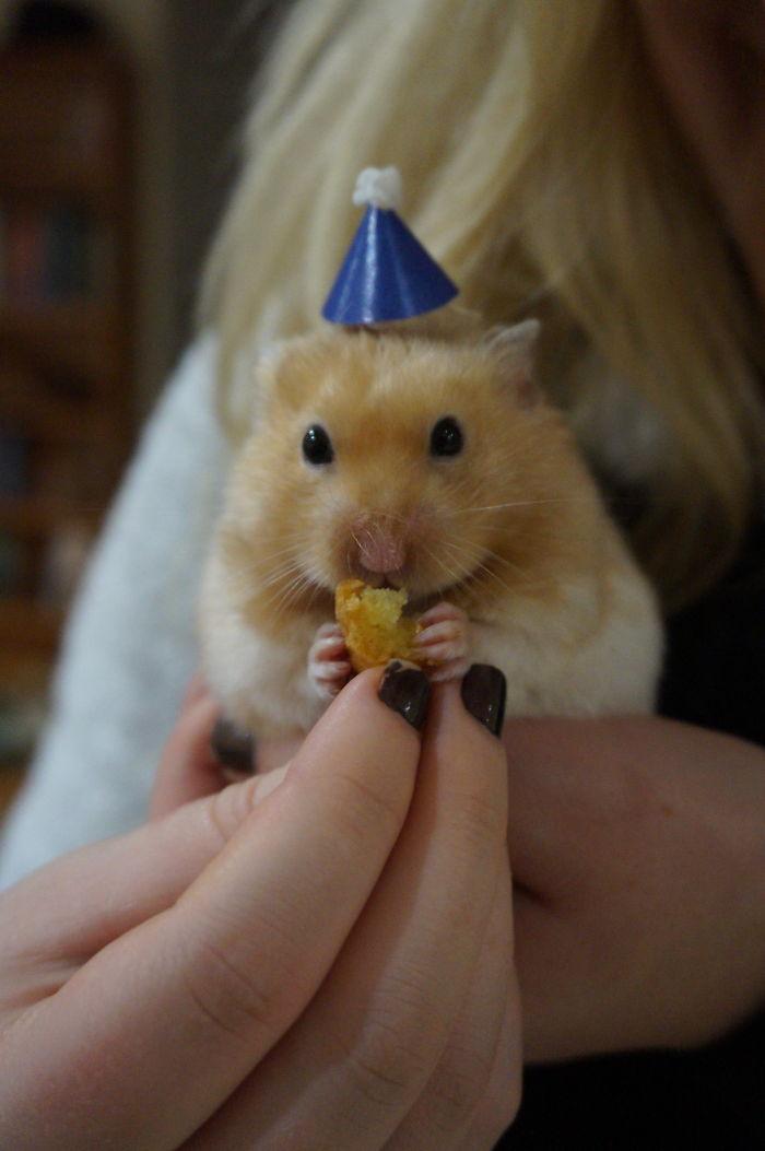 Stevie's Birthday