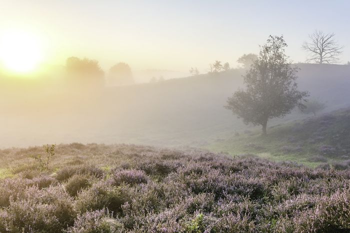 Your Last Chance To Photograph Heathland!
