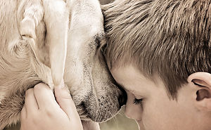 Beautiful Friendship Between My Son And Our Rescued Labrador,part Two