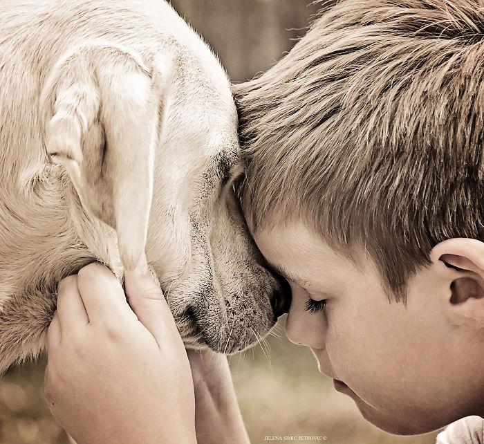 Beautiful Friendship Between My Son And Our Rescued Labrador (Part Two)