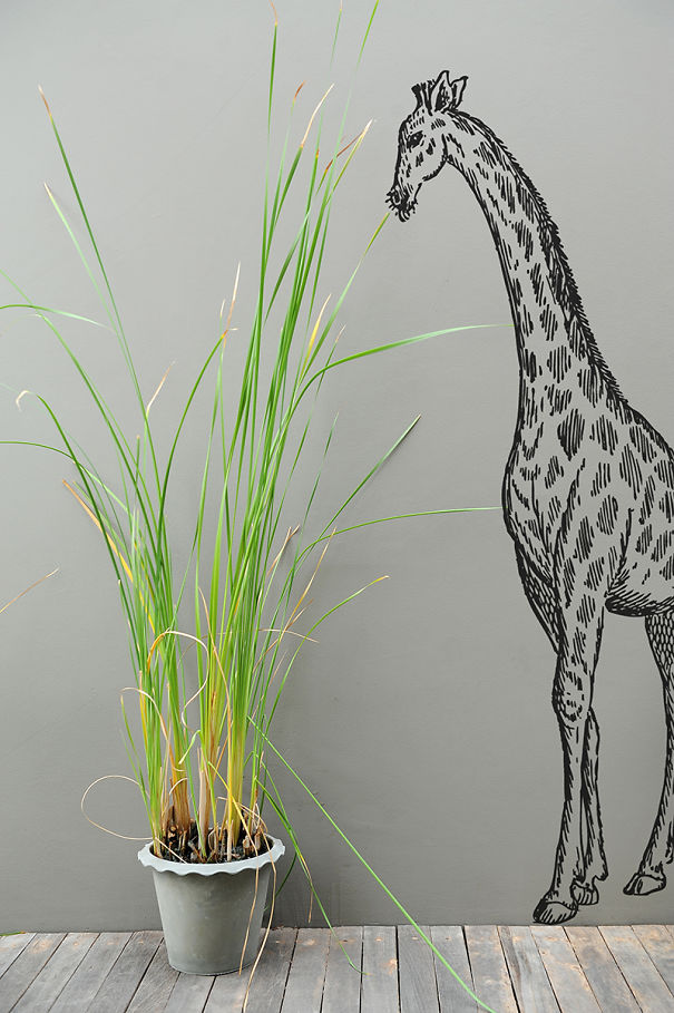 Giraffe Trying To Eat Your Plant