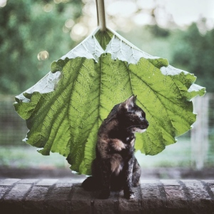 A Summer With A Cat: Why You Shouldn't Leave Your Cat At Home During Vacation