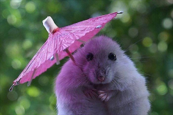 It's Rainy Today!