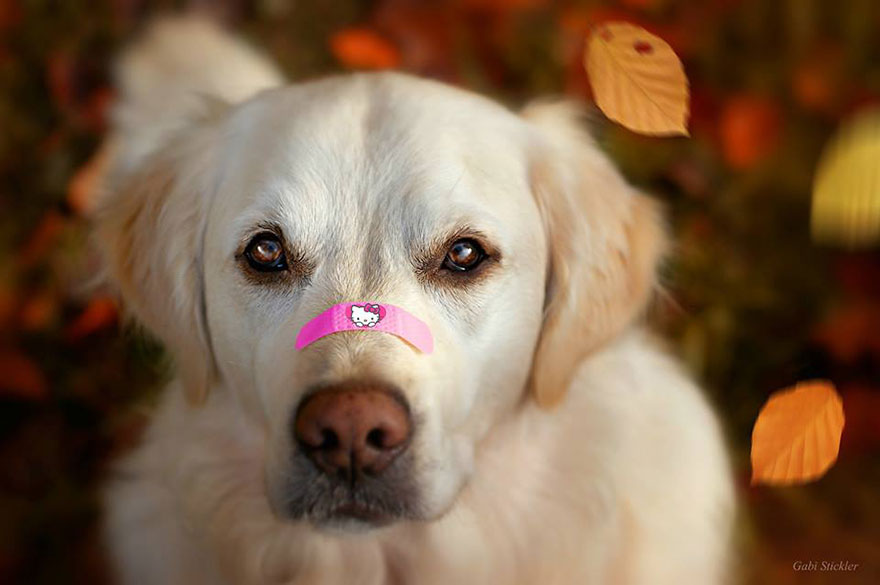 I Love My Dog S Nose Bored Panda