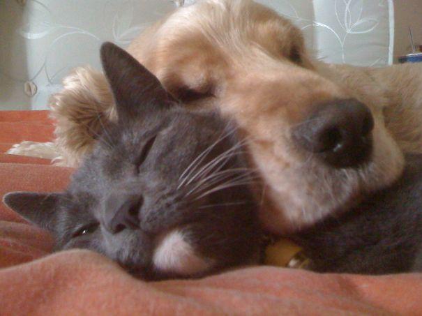 Snooze Buddies