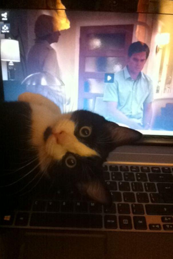 Dexter Inception