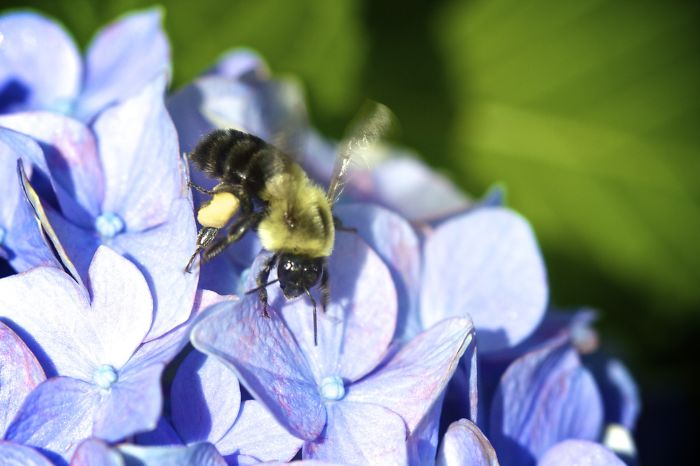 Buzzin Bee