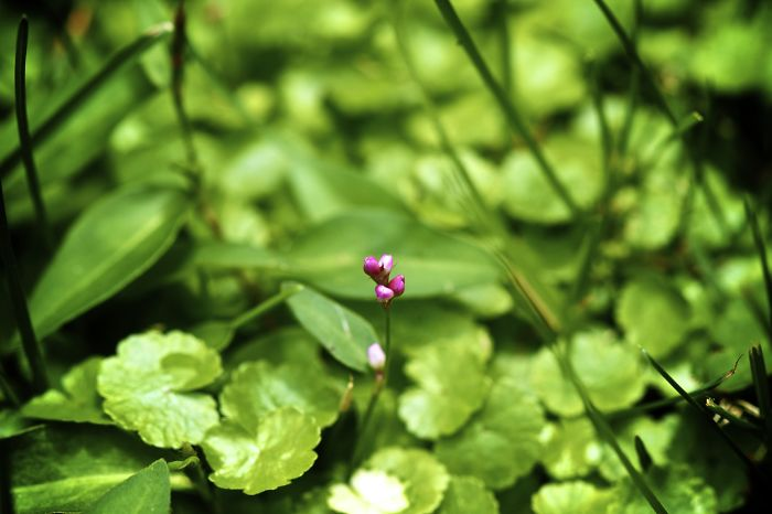 Baby Flower