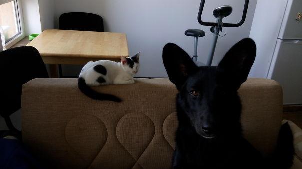 Do Not Go Near My Cat! I'm Serious!