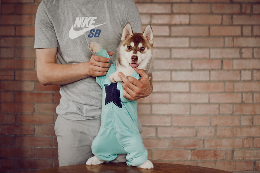 My Huskies Have Mastered The Art Of Dressing Up Bored Panda