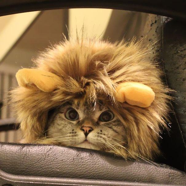 The Best Cat Instagrams