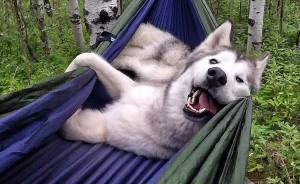 I Take My Wolfdog On Epic Adventures Because I Hate To See Dogs Locked Away
