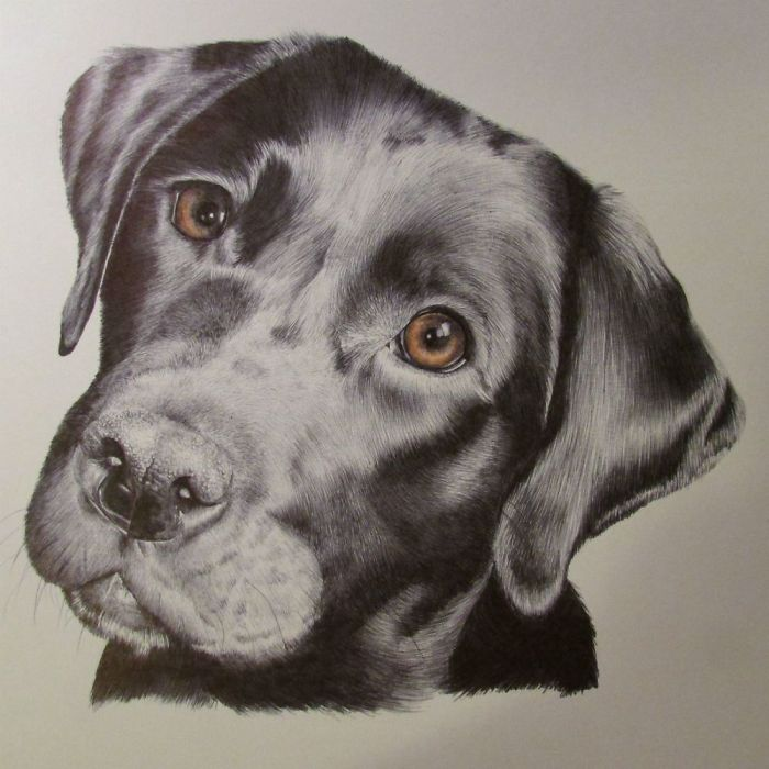 Jaw-dropping Photorealistic Pet Portraits Using Only Pen