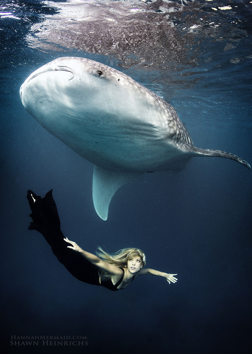 A Real-Life Mermaid Who Swims With Sharks Using Her Fish Tail And Holds Breath For 2 Minutes