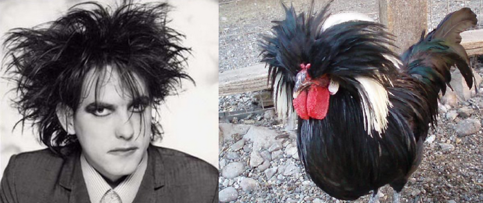 It's The Robert Smith Of Chickens!!