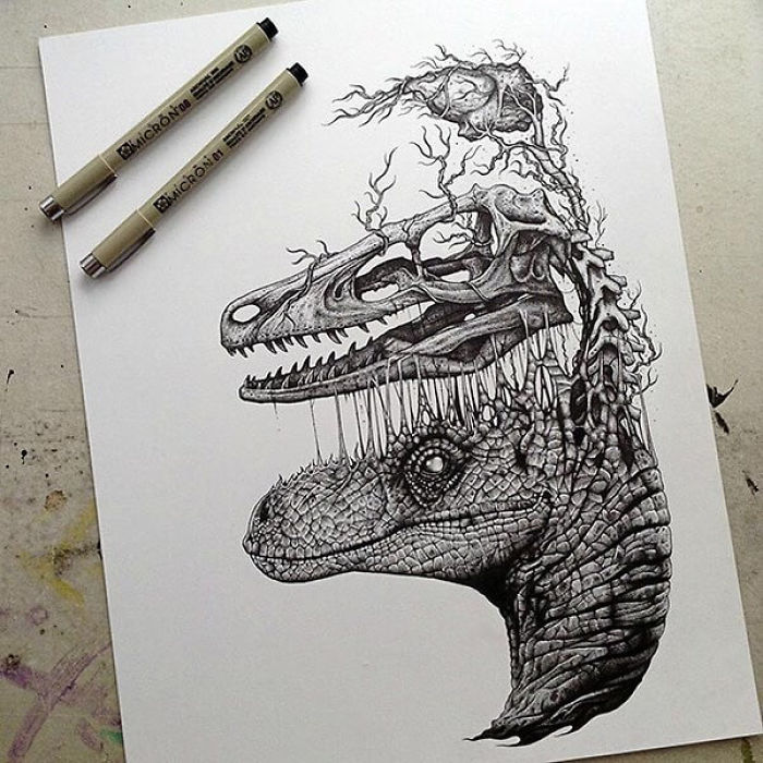Stunning Drawings Of Animal Skeletons By Paul Jackson