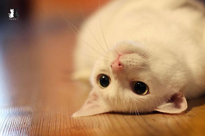 My Snow-White Cat Is My Favorite Model