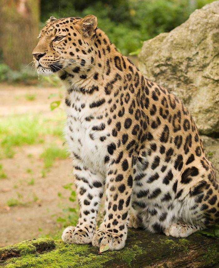 Top 10 Rarest Animals On Earth