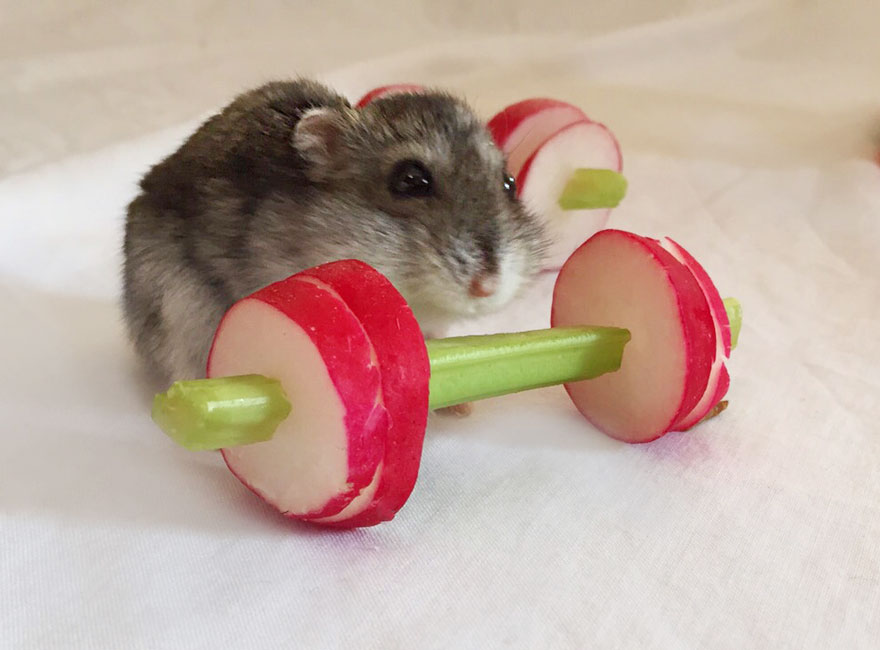 we made a tiny vegetable gym for hamsters who hate exercise bored panda. Black Bedroom Furniture Sets. Home Design Ideas