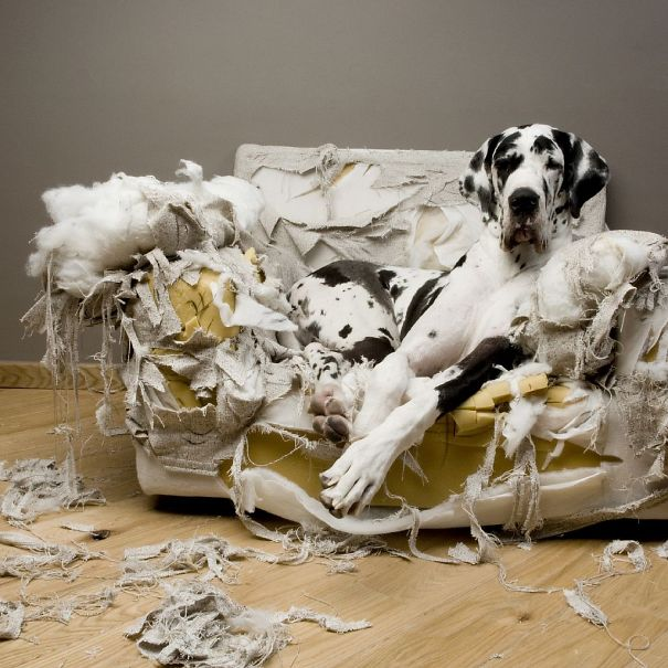 The Couch Missed Something!