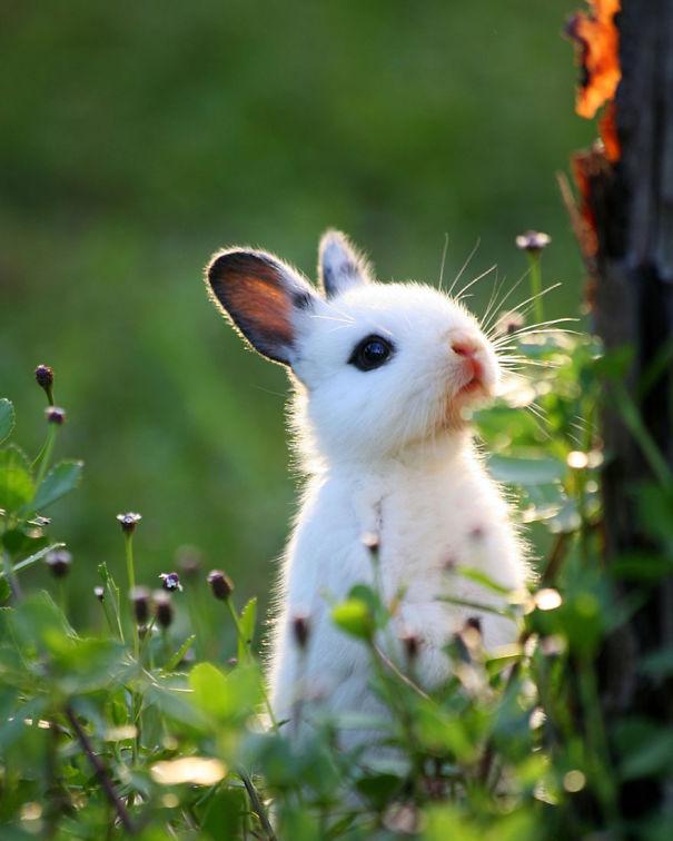 Бебе Bunny в гората