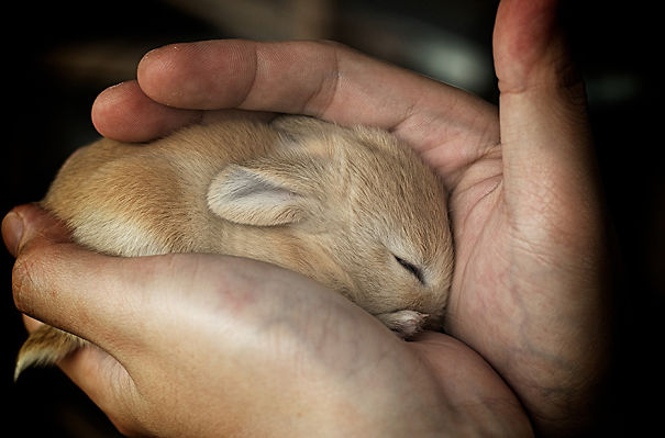 Soft Sleepy Baby Rabbit, You're Safe In My Arms