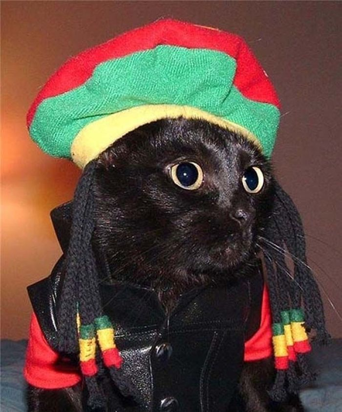 23 Cats In Halloween Costumes That Wish This Holiday Never Existed