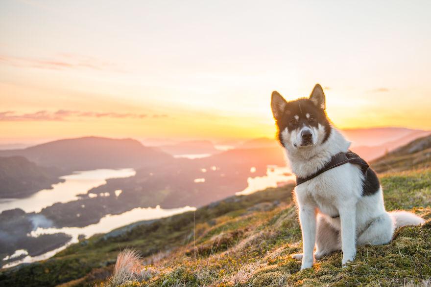 I Quit My Job To Go On Adventures With My Husky