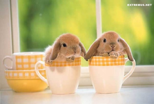A Cup Of Bunny!