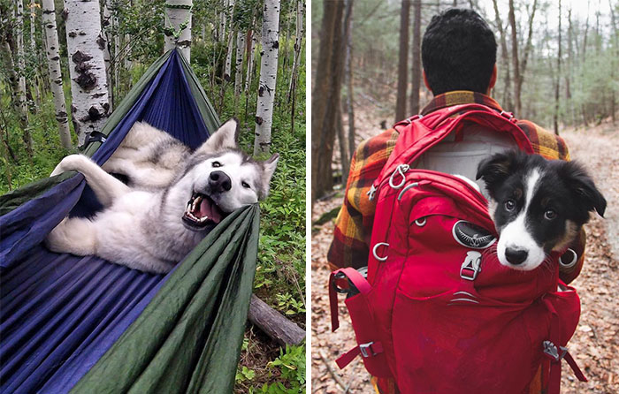 """""""Camping With Dogs"""" Instagram Will Inspire You To Go Hiking With Your Dog"""