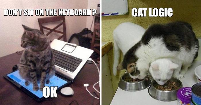 Let The Cat In Meme