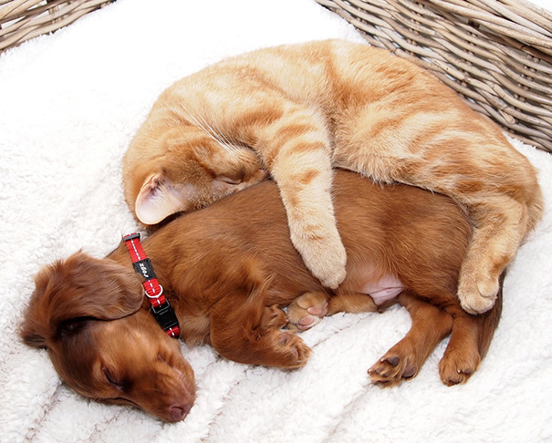 Feline Friends - How to help your Cats get Along | Okaw ...
