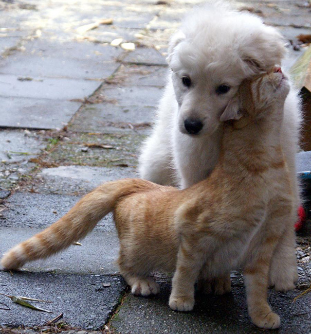 When Cat And Dog Get Along