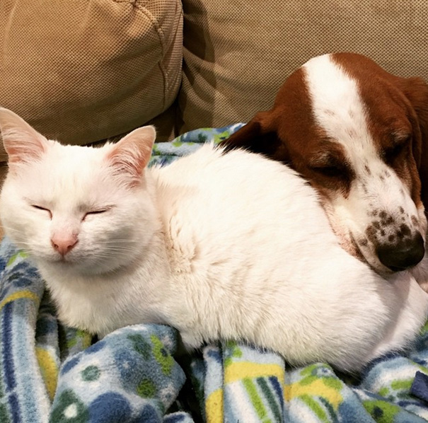 Darling The Cat Loves All The Dogs