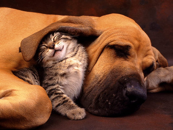 10 pics proving that cats and dogs can be best friends