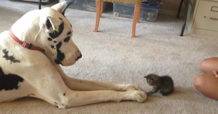 112 Pics Proving That Cats And Dogs Can Be Best Friends Bored Panda