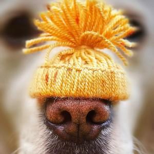 I Love My Dog's Nose