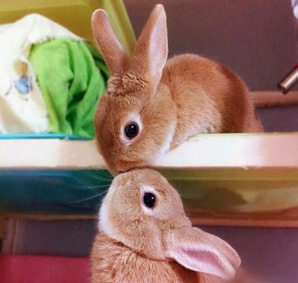 Cute Rabbits 105 Of The Cutest Bunn...