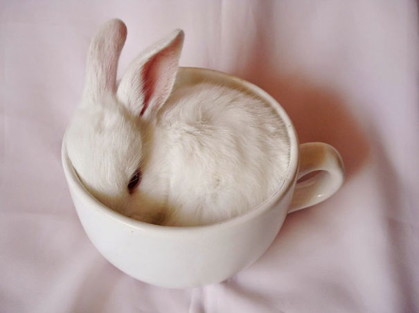 Little Bunny In Cup