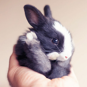 20+ Of The Cutest Bunnies Ever