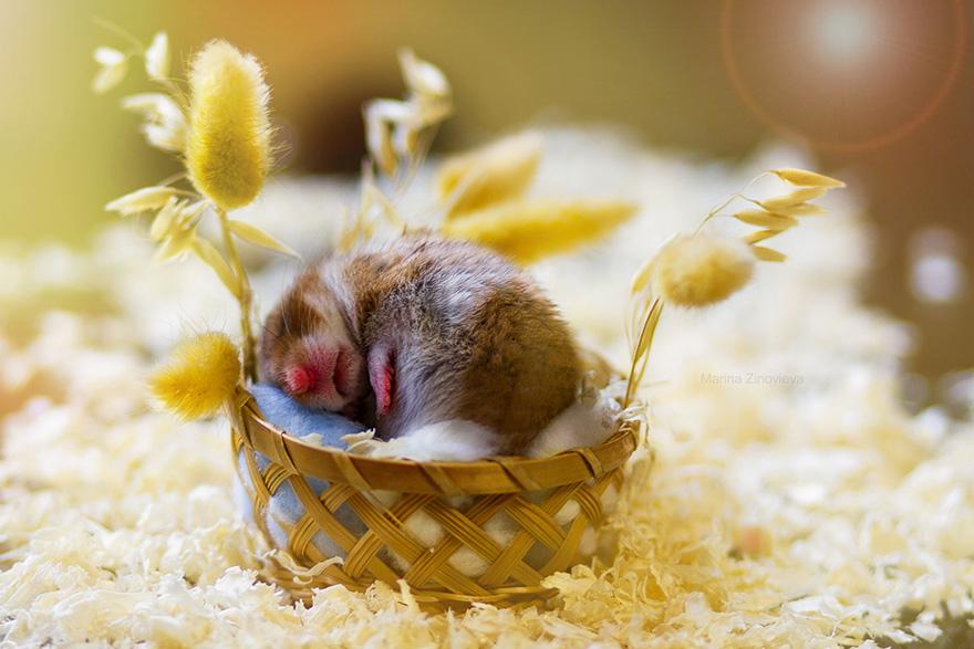 お休み中の赤ちゃんハムスター