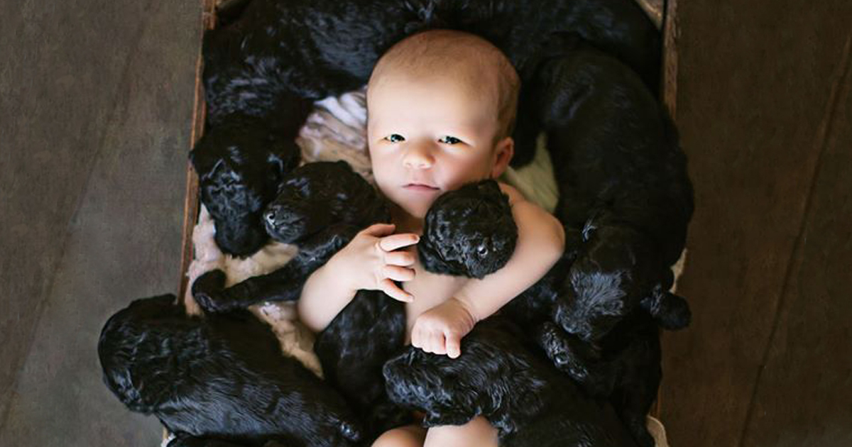 Can You Dog Board With Children