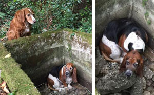 Dog Spends A WEEK Guarding Her Trapped Best Friend Until Help Arrives