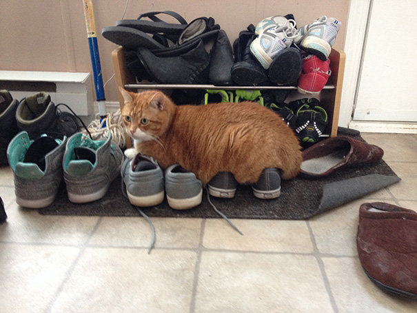Cat Logic: Comfy Cat Bed Or Shoes? Shoes