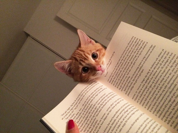 You Don't Want To Read, You Want To Pet And Love Your Kitty