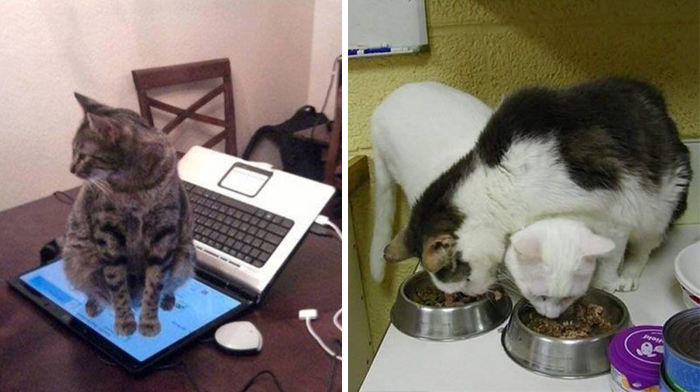 174 Hilarious Examples Of Cat Logic