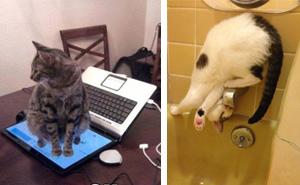 15+ Hilarious Examples Of Cat Logic